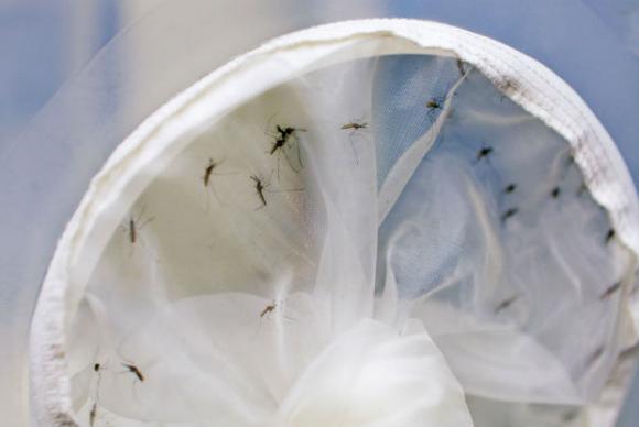 malária investigação teste rápido